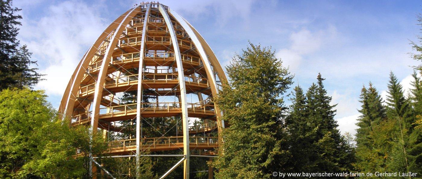 ausflugsziele-bayerischer-wald-sehenswuerdigkeiten-waldwipfelpfad